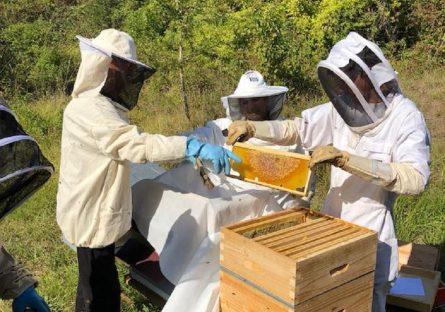 Cours du rucher-école de Varzy
